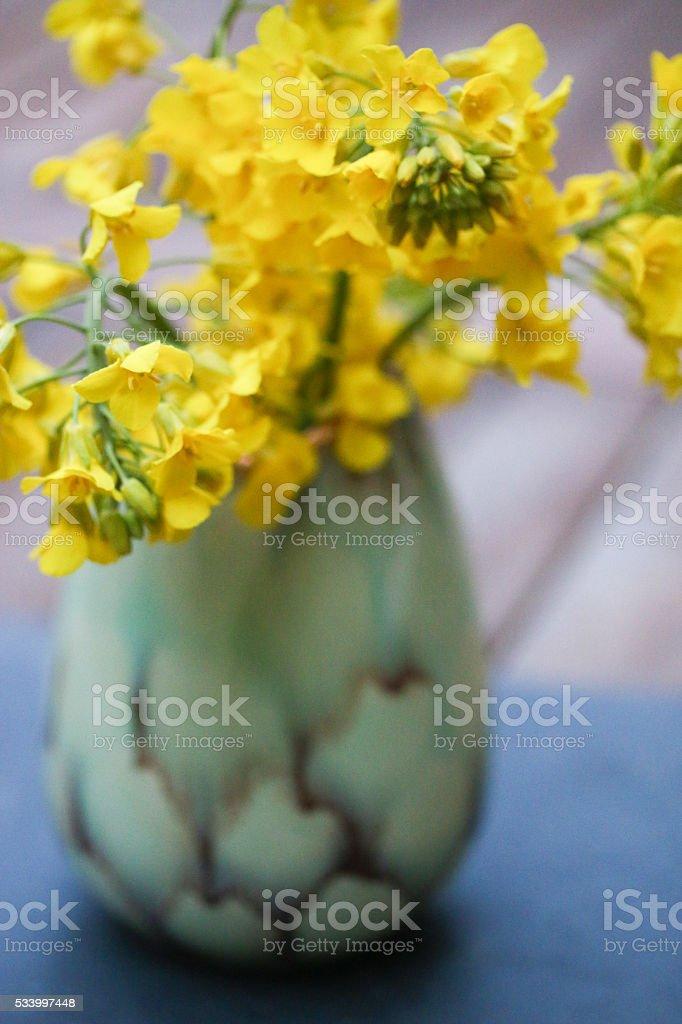 Strauß aus Rapsblüten stock photo