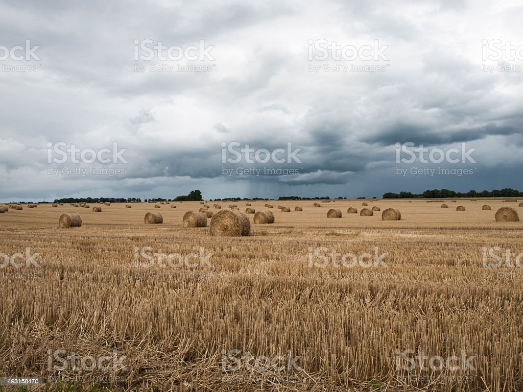 Paja tras la cosecha. Straw after the harvest. stock photo