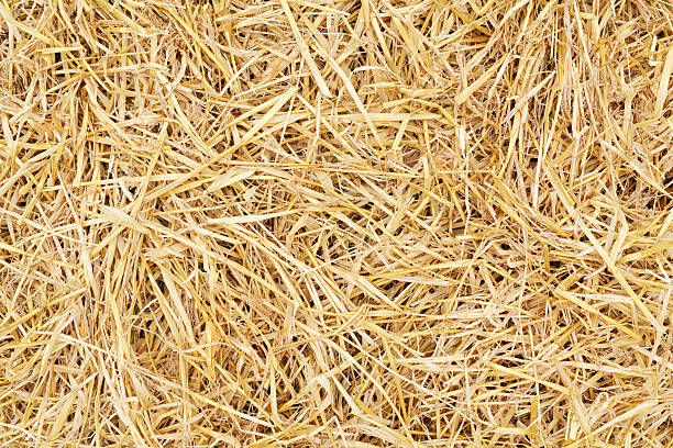 Straw background Golden yellow straw dried to perfection after a long hot summer. Here are more images in the eggs and straw series: hay stock pictures, royalty-free photos & images