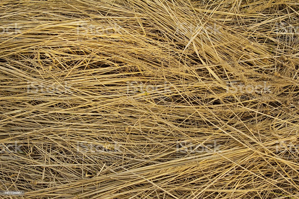 straw background royalty-free stock photo