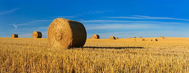 Straw Bale Harvest in Stubble Field under Blue Sky stock photo
