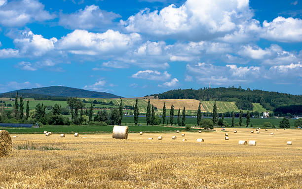 Straw bales and poplars stock photo