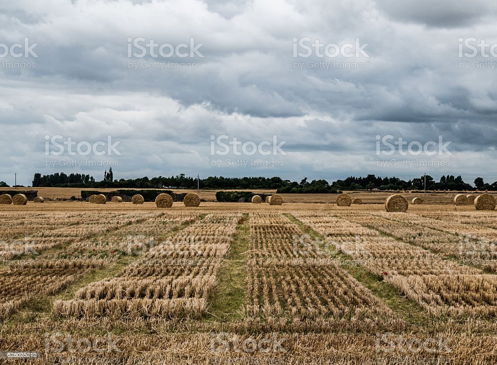 Straw Bales, County Carlow stock photo