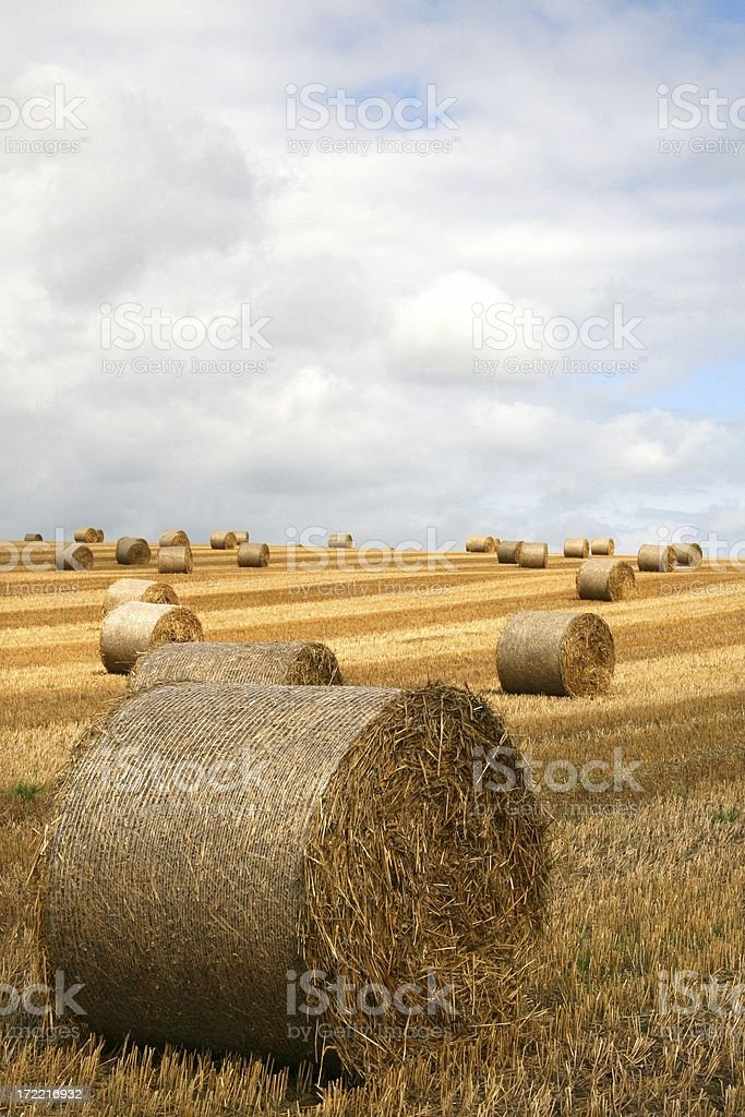 Straw Bales in striped field royalty-free stock photo