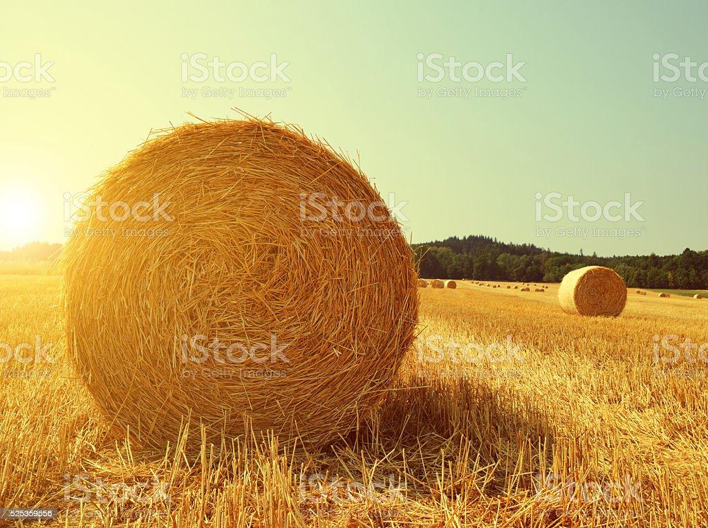 Straw bales on farmland stock photo