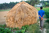 Straw bales stacked on paddy field in India, stock photo