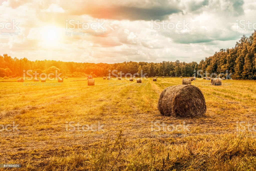 Straw bales on the field, hay making stock photo