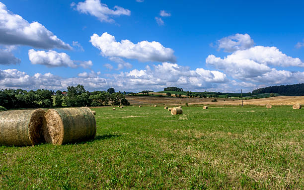 Straw bales on the field stock photo