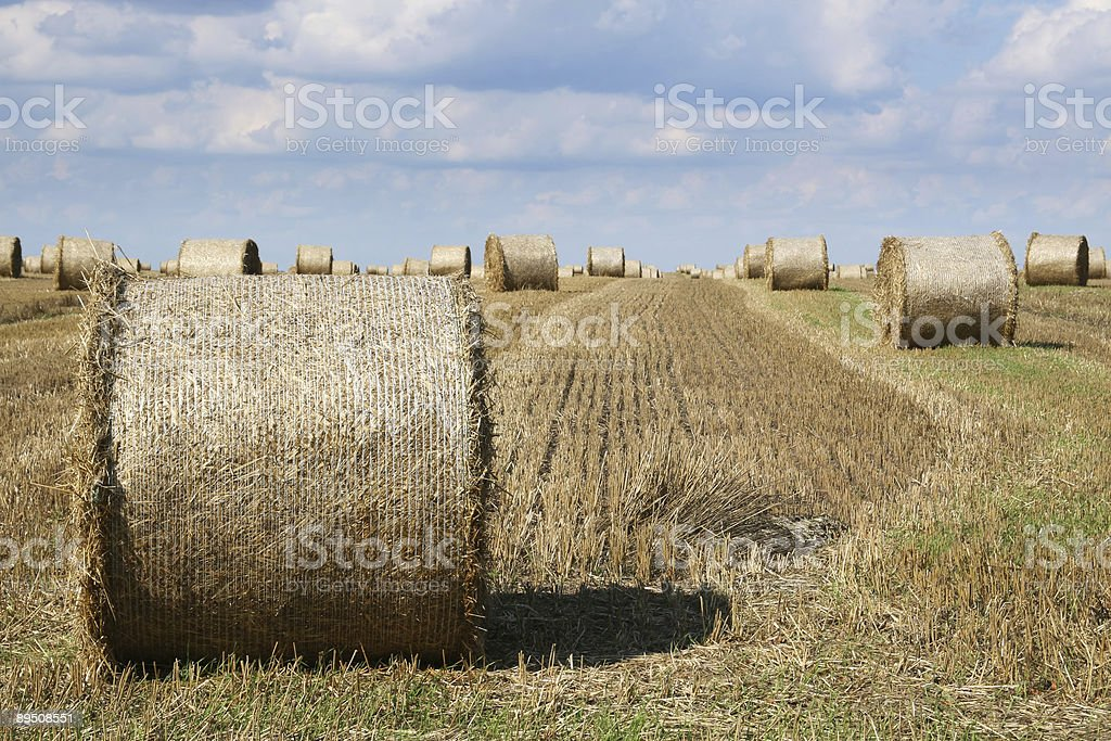 Straw bales royalty-free stock photo