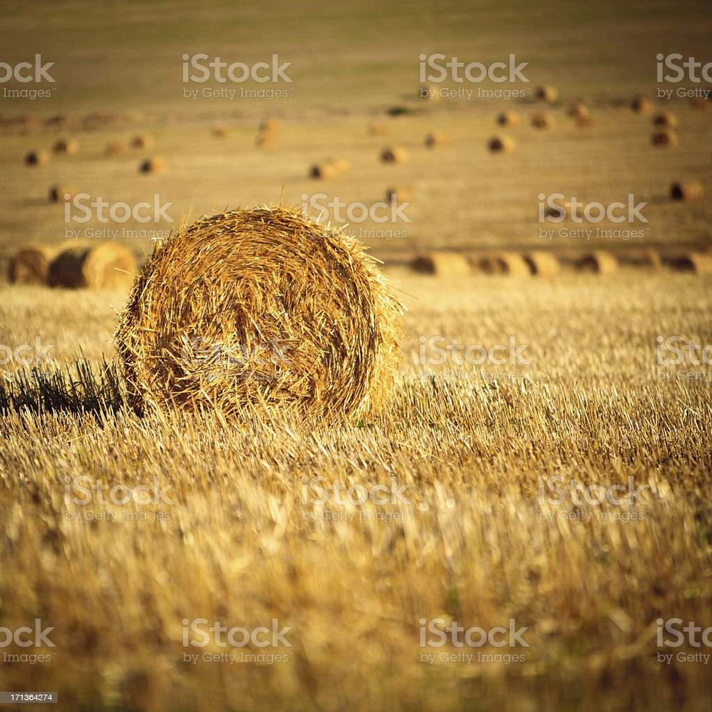 Straw bales South Africa royalty-free stock photo