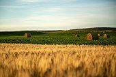 istock Straw barrels and wheat field at sunrise 1271402124