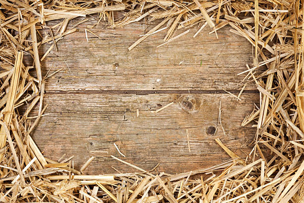 Straw frame on rustic wood Frame of hay on rustic wooden floor with space for text hay stock pictures, royalty-free photos & images