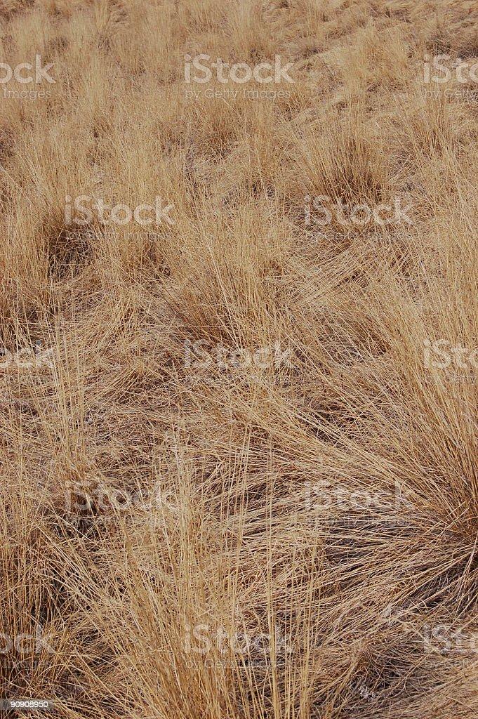 Straw Grass royalty-free stock photo
