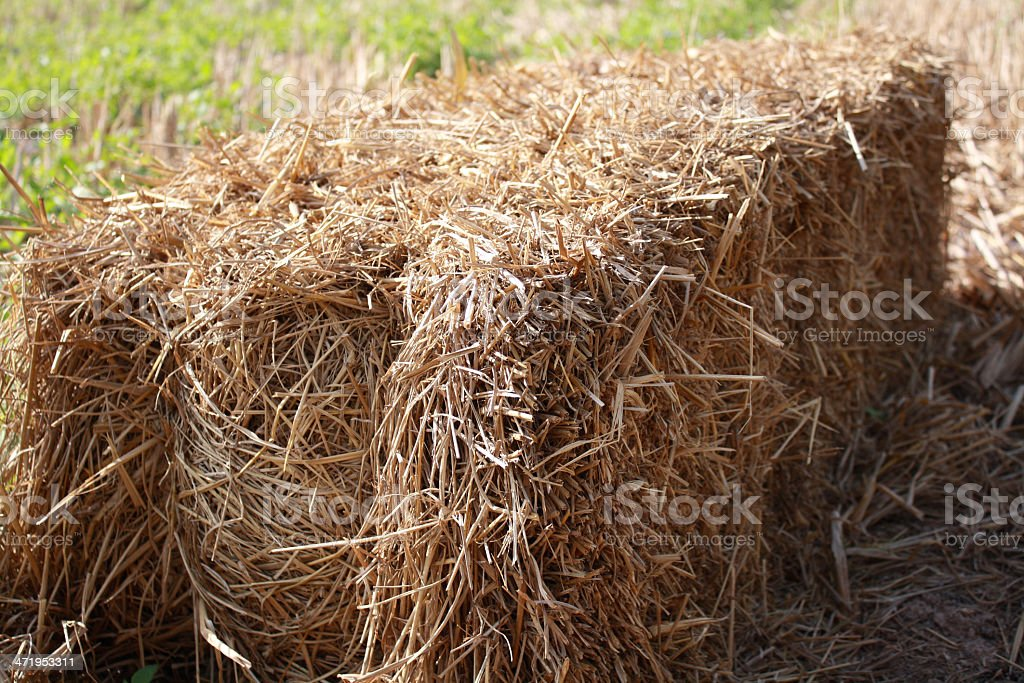 straw in rice field royalty-free stock photo