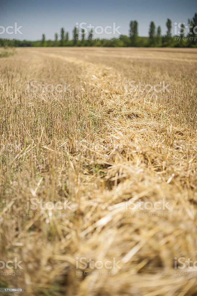 straw on field royalty-free stock photo