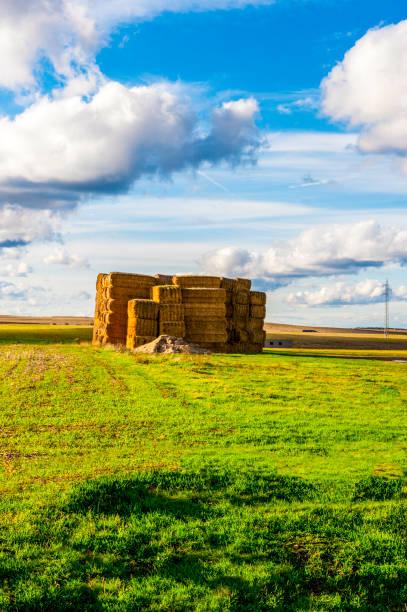 paquete de paja o rollo de paja es un paquete de lana, rama de algodón o paja. alpaca, paca de paja de cereal, trigo, cebada, centeno, etc. - monse del campo fotografías e imágenes de stock