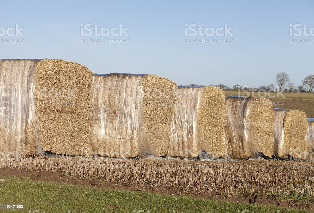 Straw Packed in polyethylene royalty-free stock photo