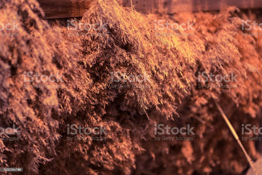 Straw pattern and texture. Thatch background stock photo