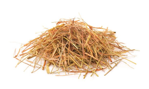Straw Heap of straw isolated on white hay stock pictures, royalty-free photos & images