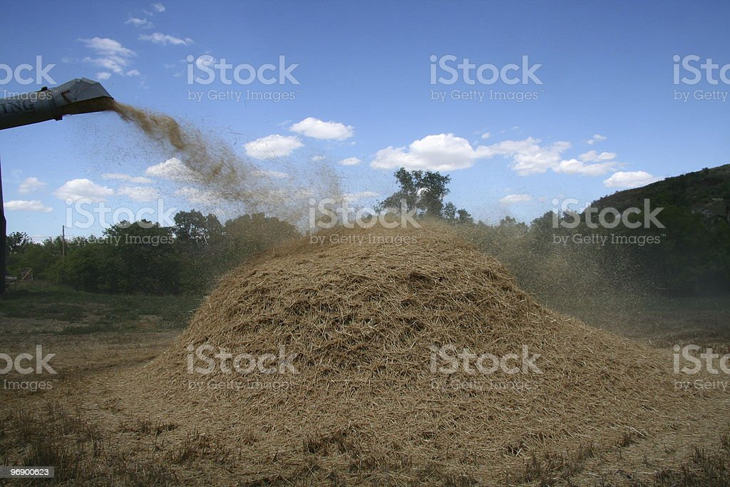 Straw Pile from thresher royalty-free stock photo