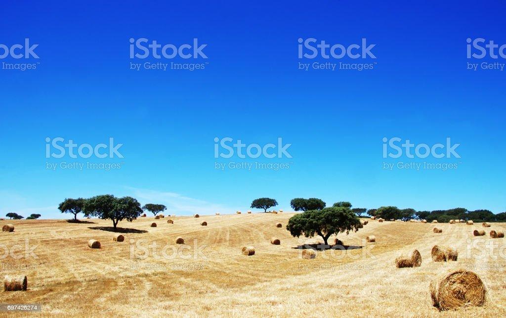 Stroh Rollen im Süden von Portugal – Foto