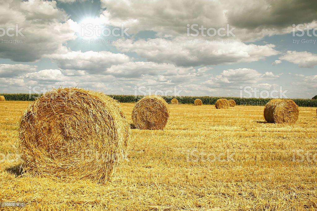 Straw rolls royalty-free stock photo