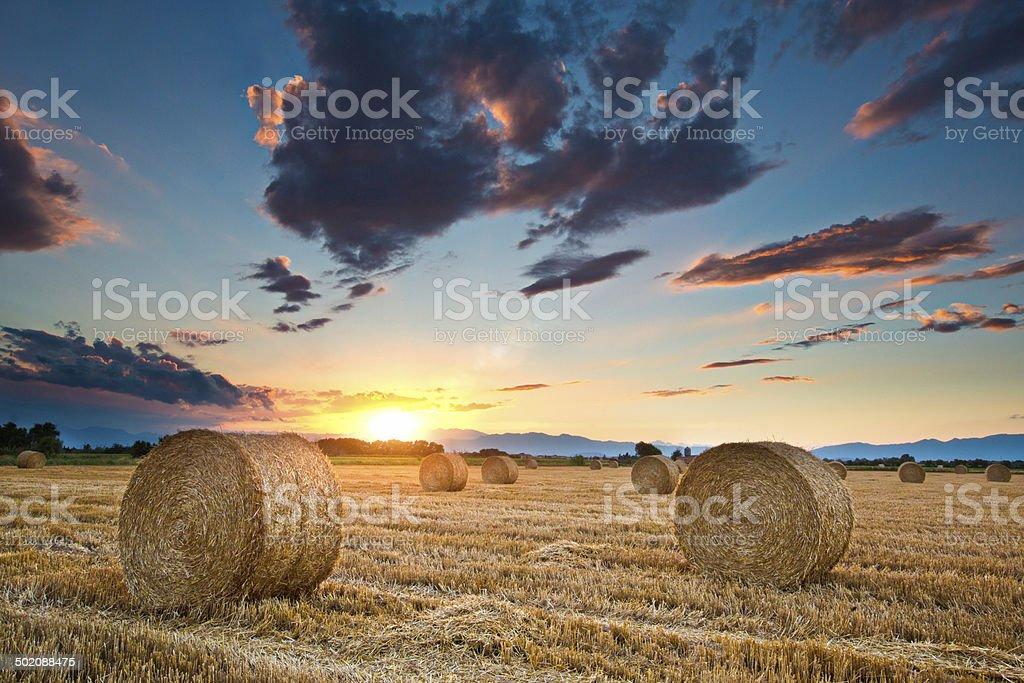 Straw rolls stock photo
