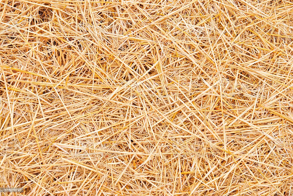 Straw scattered about to create background royalty-free stock photo