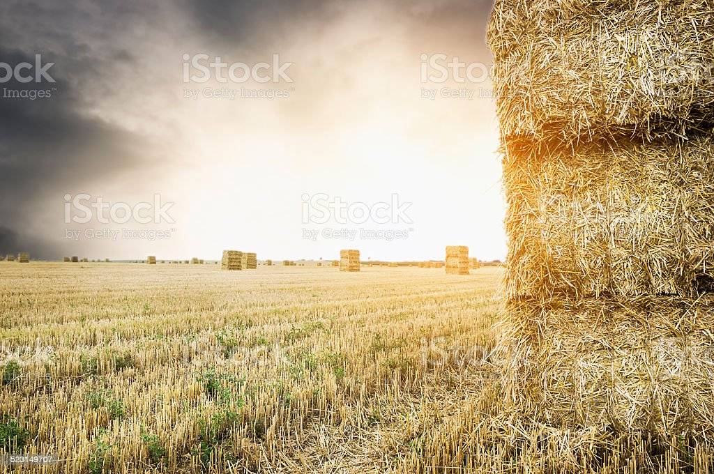 straw square bale on field with sunset cloudy  sky stock photo