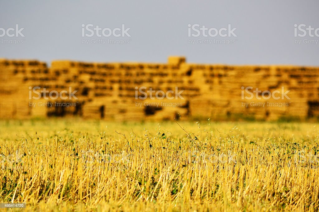 straw with capital straw in background stock photo