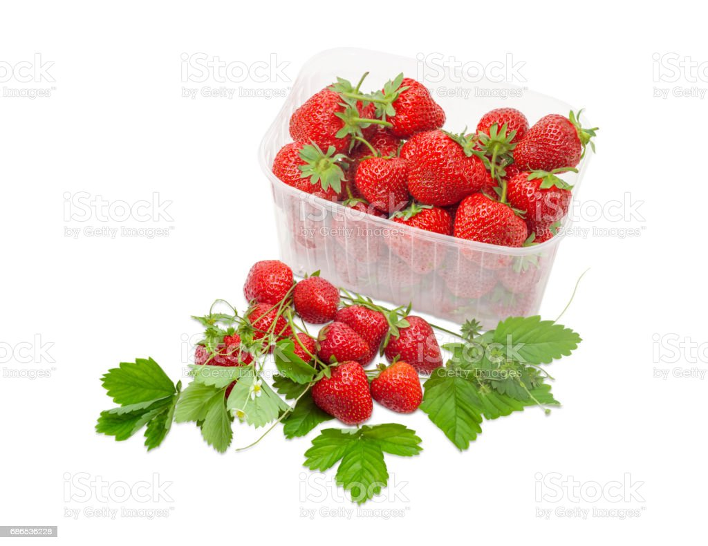 Strawberries among leaves and stems and strawberries in plastic container foto de stock libre de derechos