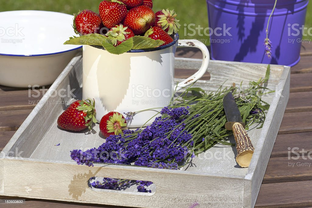 Strawberries and lavender on a tray royalty-free stock photo