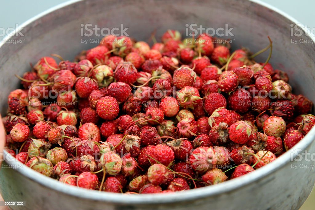 strawberries in a bucket stock photo