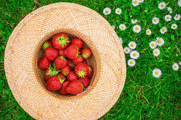 Erdbeeren in ein Hut – Foto