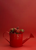 Freshly picked strawberries in a watering can on a red background. Environmentally friendly product. Harvest berries. Healthy way of life, vitamins. Copy space. Layout for design.