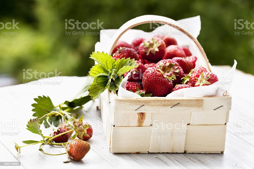 strawberries in basket stock photo