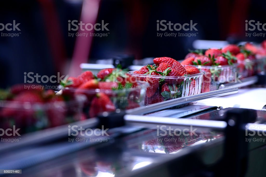 Strawberries on conveyor belt stock photo