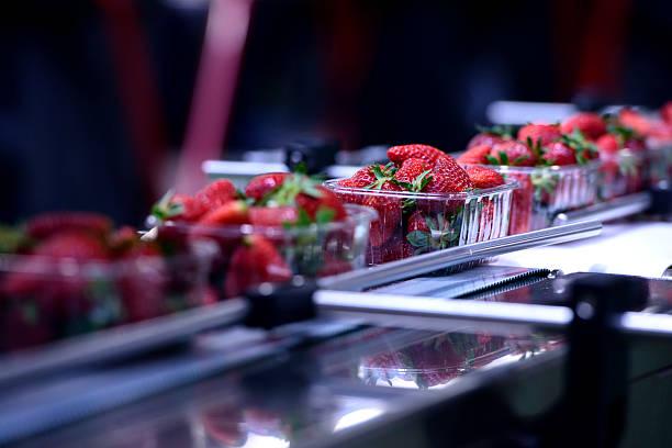 strawberries on conveyor belt - livsmedelstillverkningsfabrik bildbanksfoton och bilder