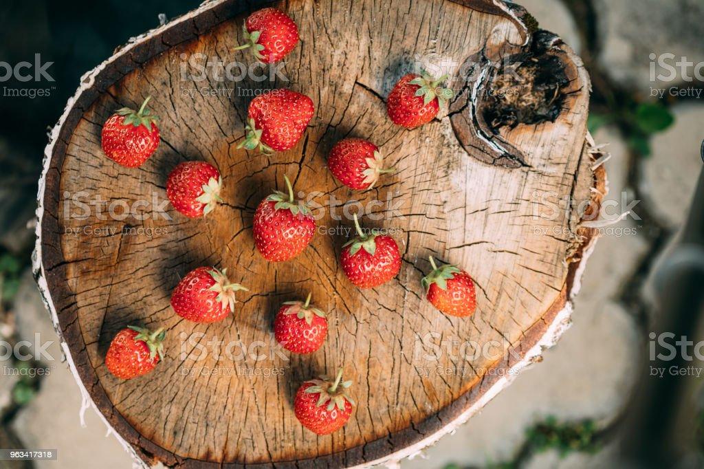 Truskawki. Dojrzałe truskawkowe organiczne jagody. Soczyste świeże dojrzałe czerwone truskawki na starym brzozowym pniu - Zbiór zdjęć royalty-free (Białoruś)