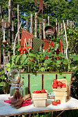 strawberries tomatoes and chilli growing on balcony in Munich, BY, Germany