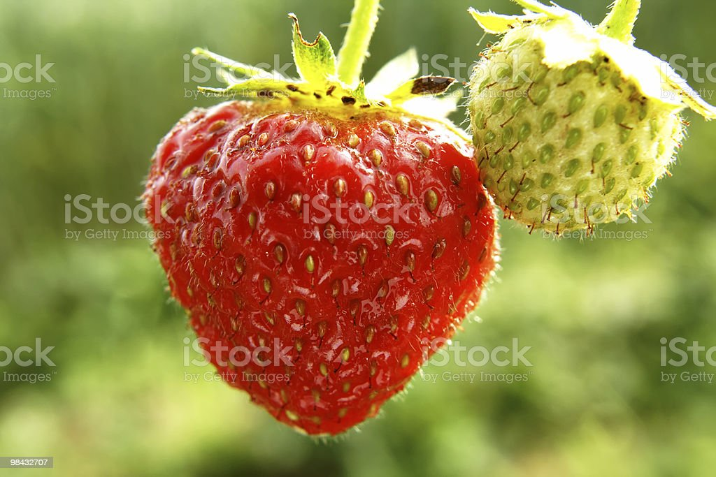 strawberry 5 royalty-free stock photo
