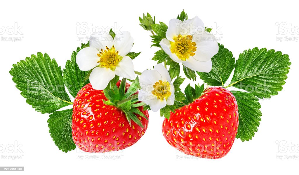 strawberry and strawberry  flower isolated on white royalty free stockfoto