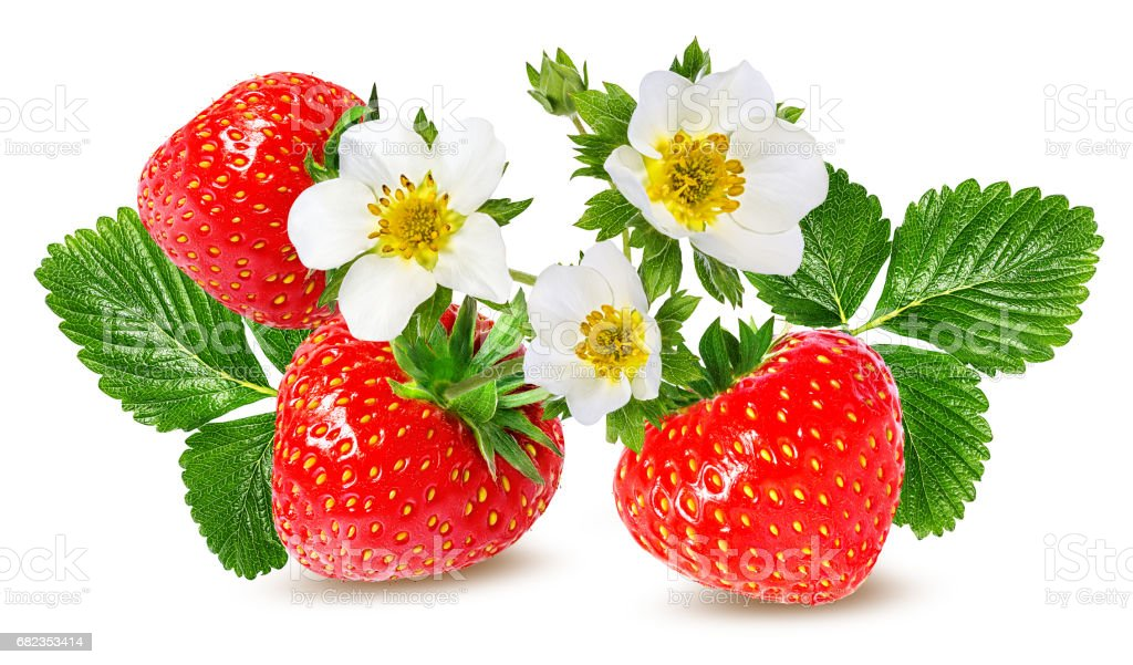 strawberry and strawberry  flower isolated on white royaltyfri bildbanksbilder