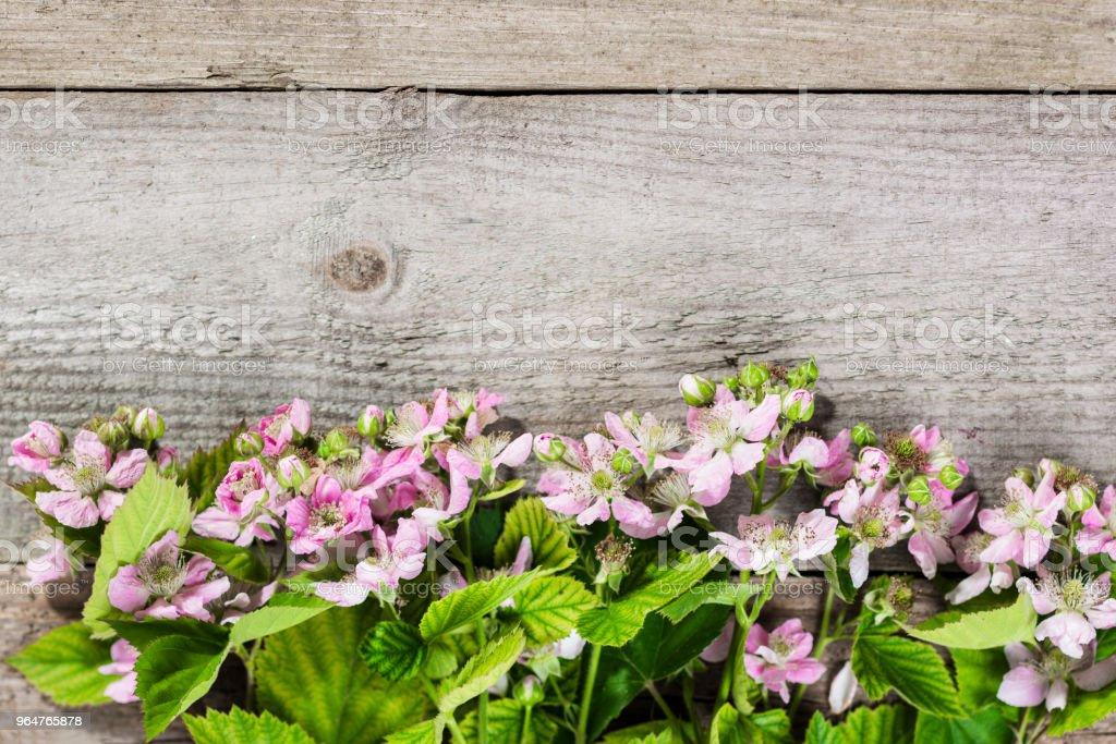 Strawberry bushes royalty-free stock photo