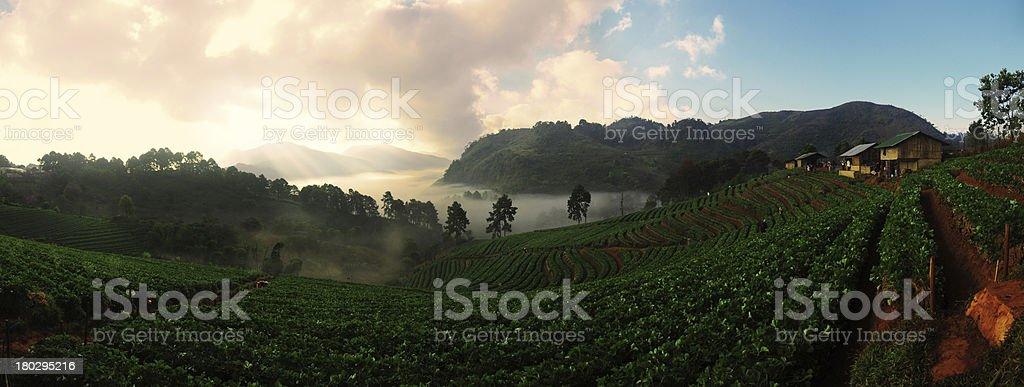 Strawberry Farm Panorama at Doi Ang Khang, Chiang Mai, Thailand royalty-free stock photo