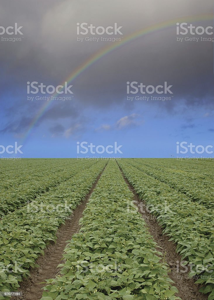 strawberry field forever royalty-free stock photo
