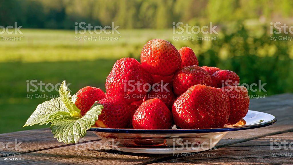 Strawberry fields stock photo