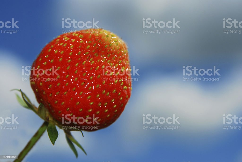 strawberry in a blue sky background royalty-free stock photo