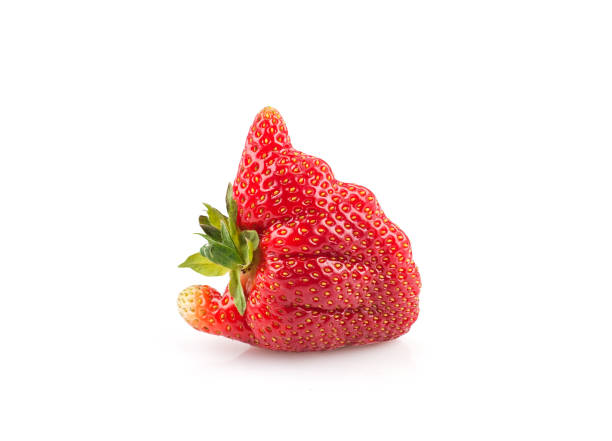 Strawberry isolated on white background. Ugly organic home grown strawberry isolated on white background.Trendy ugly food.Strange funny imperfect fruit .Misshapen produce, food waste concept. Top view, copy space. imperfection stock pictures, royalty-free photos & images