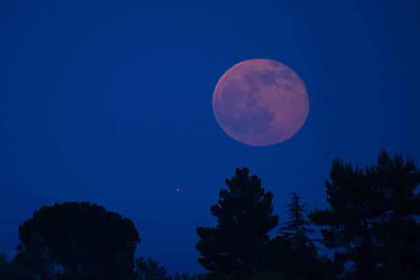 Strawberry Moon and Pine Trees stock photo